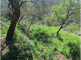 306 sqm investment land in marmaris sogut , contain an old house in